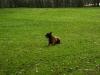 imgp7591-oefenen-met-phv-beilen-17-maart-2012-04